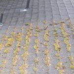 À quelle vitesse la mousse pousse-t-elle sur les toits ?
