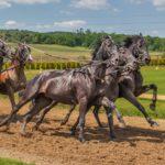 3 raisons pour lesquelles vous devez monter à cheval